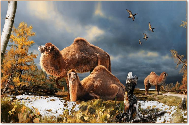 artic-camel
