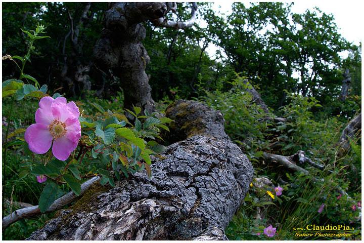 Varie e belle rosacee