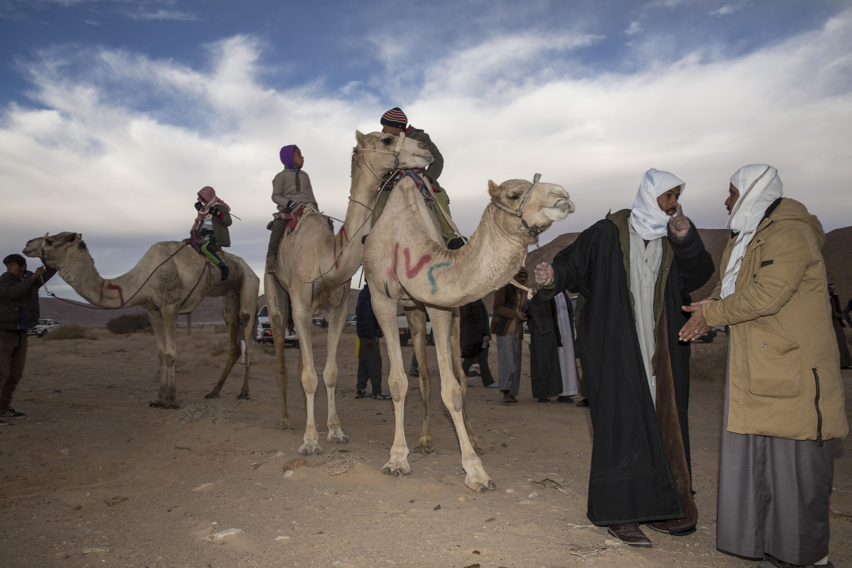Camel Race, Wadi Zalaqa