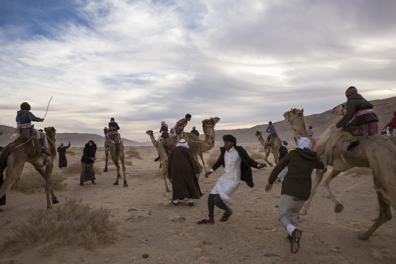 Partenza Camel Race, Wadi Zalaqa, Sinai