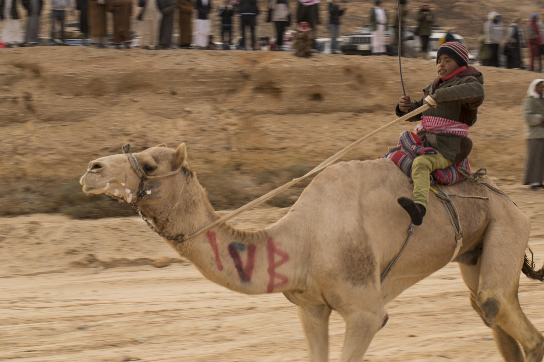 Camel Race, Wadi Zalaqa, Sinai
