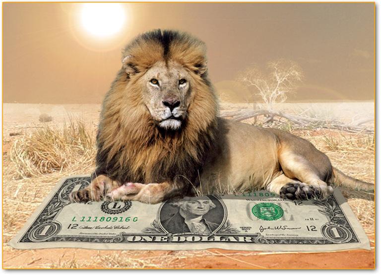 La caccia pu salvare i leoni imperial bulldog - Un letto di leoni ...