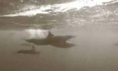 delfini-sudan