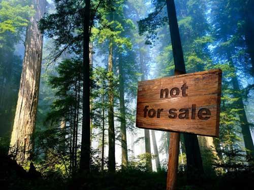 foreste non in vendita