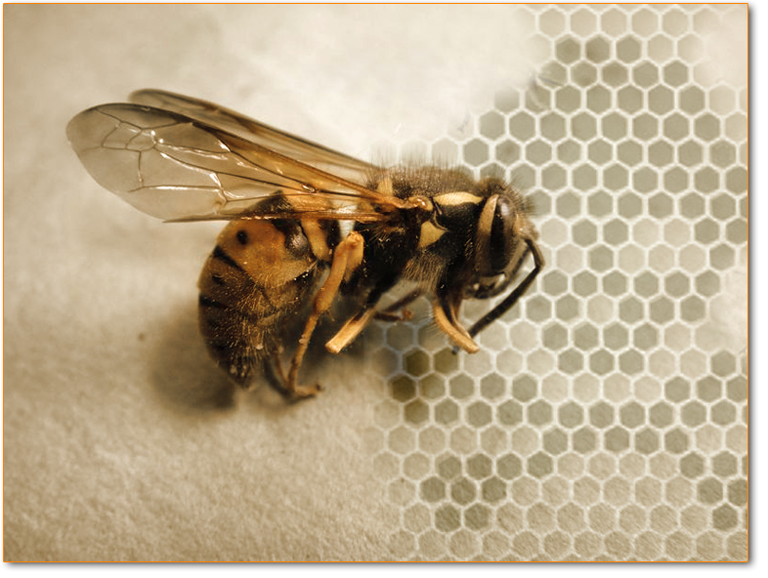 bee-death