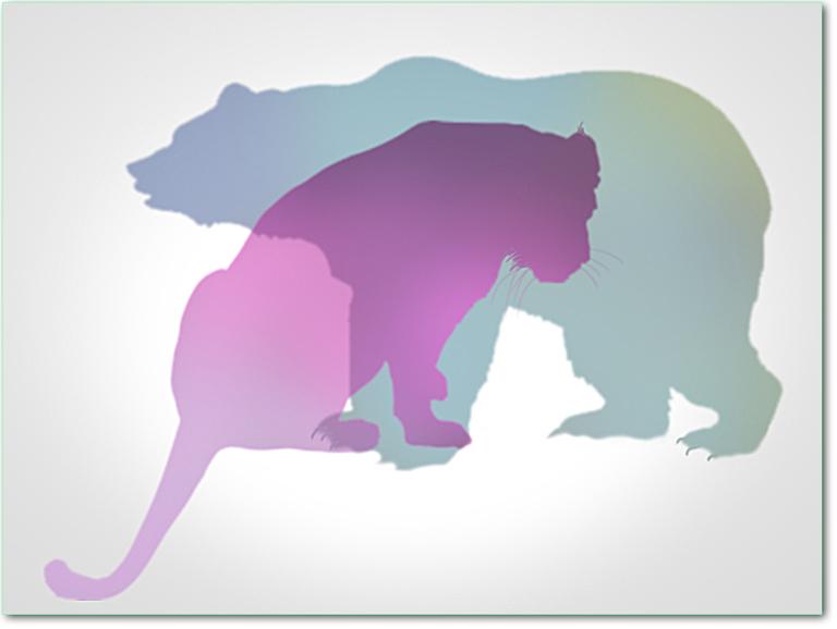 tiger-bear