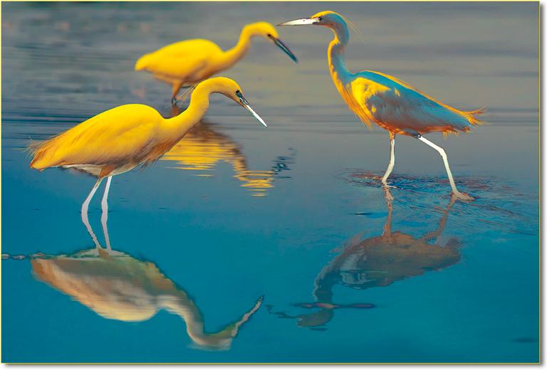 uccelli-costieri