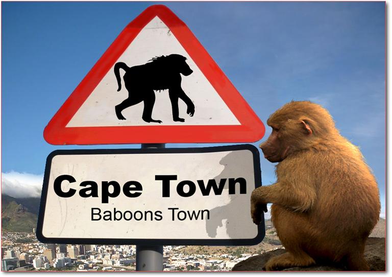 baboons 2