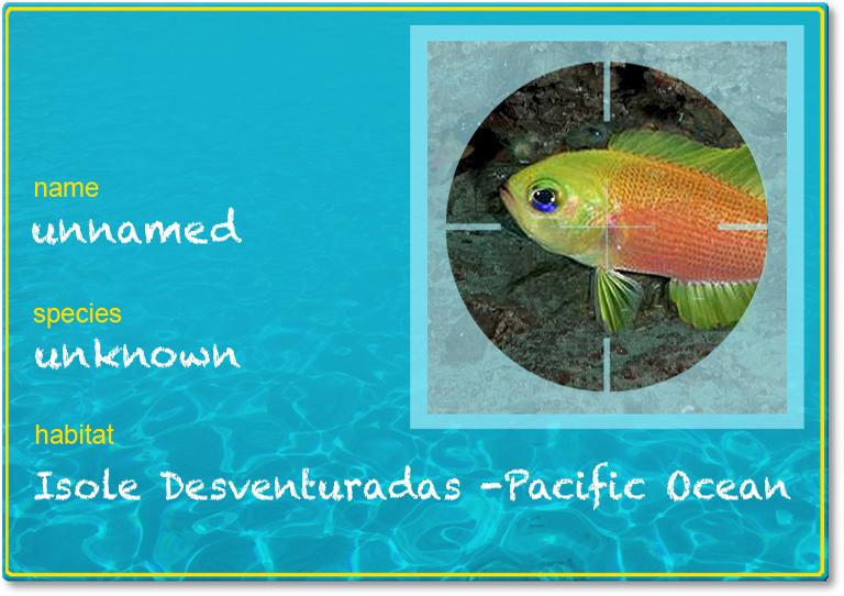 pesce-senza-nome-2