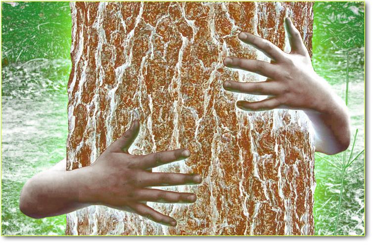 abrraccio-albero