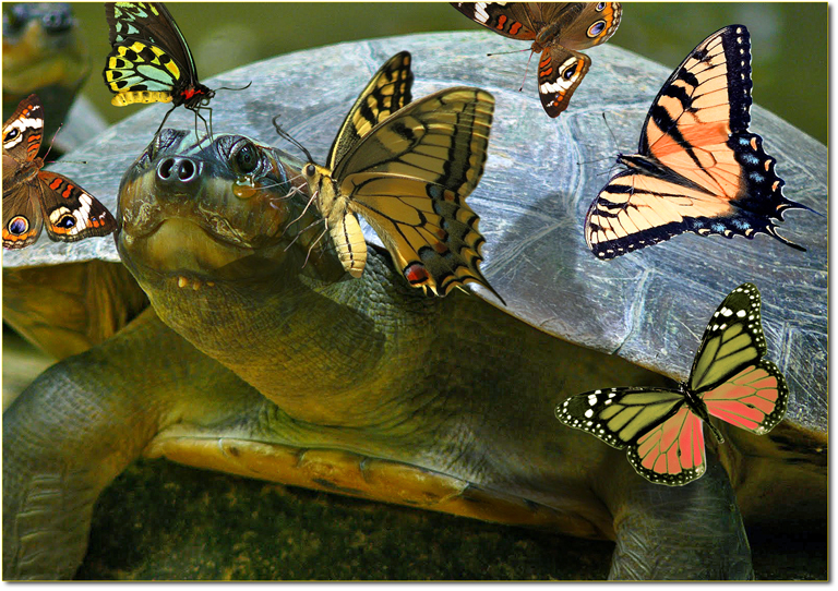Amazonian-Butterflies-Drink-Turtle-Tears