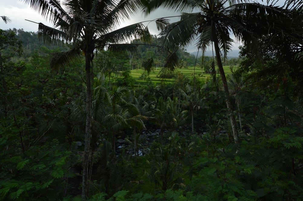 DSC_0085greenforest-SMALL