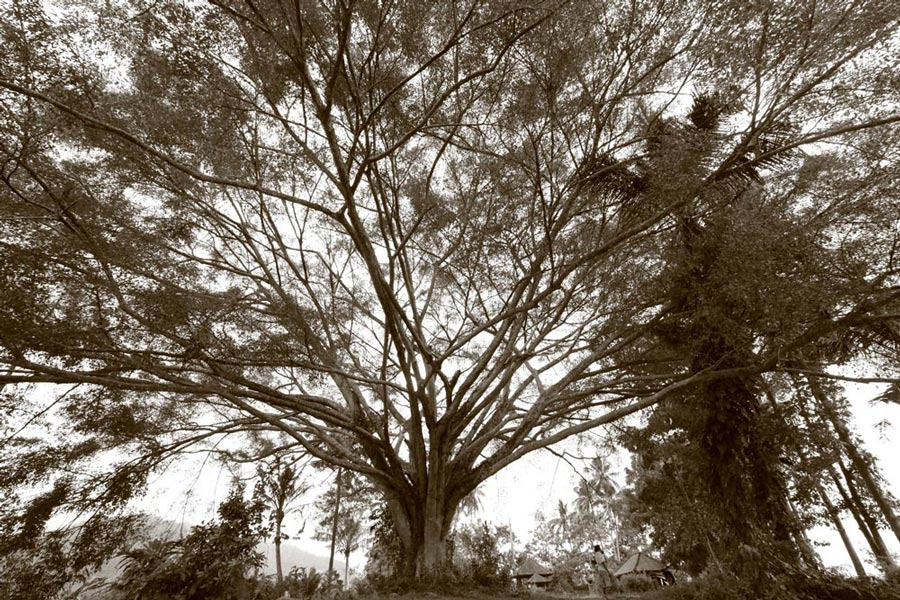 _MG_8636super-treeSMALL