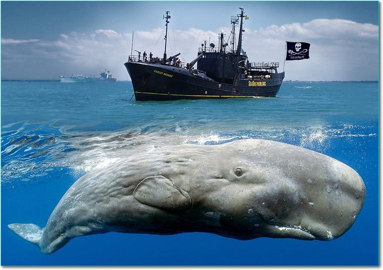 Sea-Shepherd-ship
