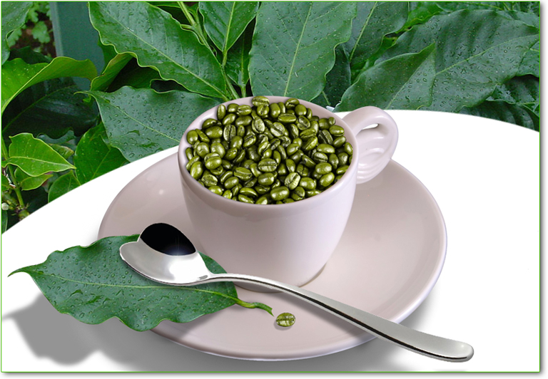 caffe verde a cosa fa bene