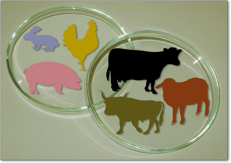 vitro-meat