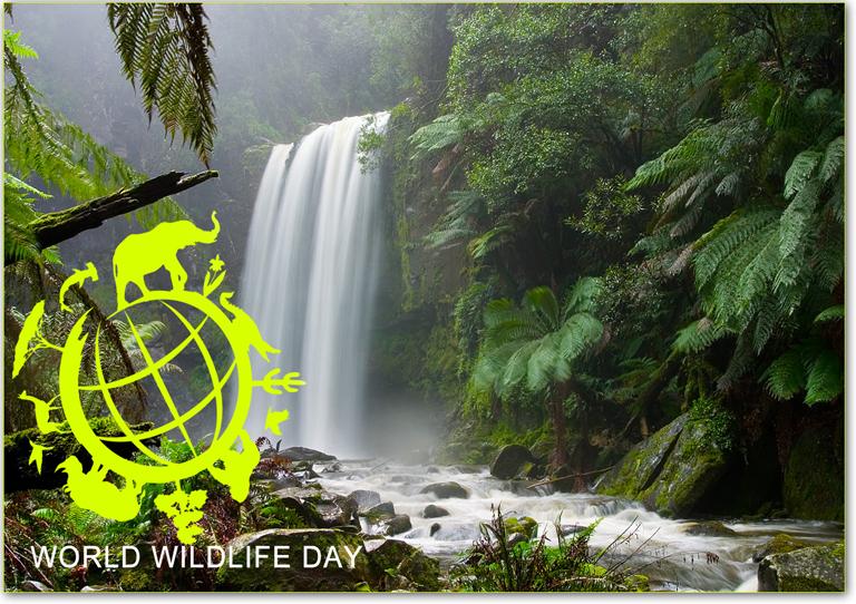 world-wildlife