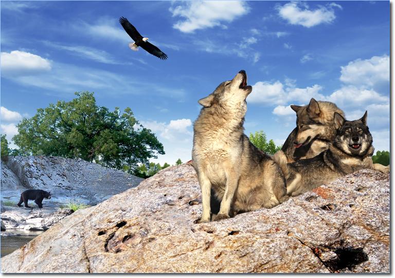 Risultati immagini per abbattimento animali selvatici