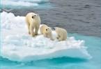 polarbear-small