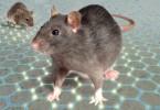 ratti-small