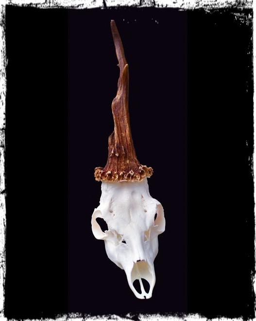 unicorno slovenia