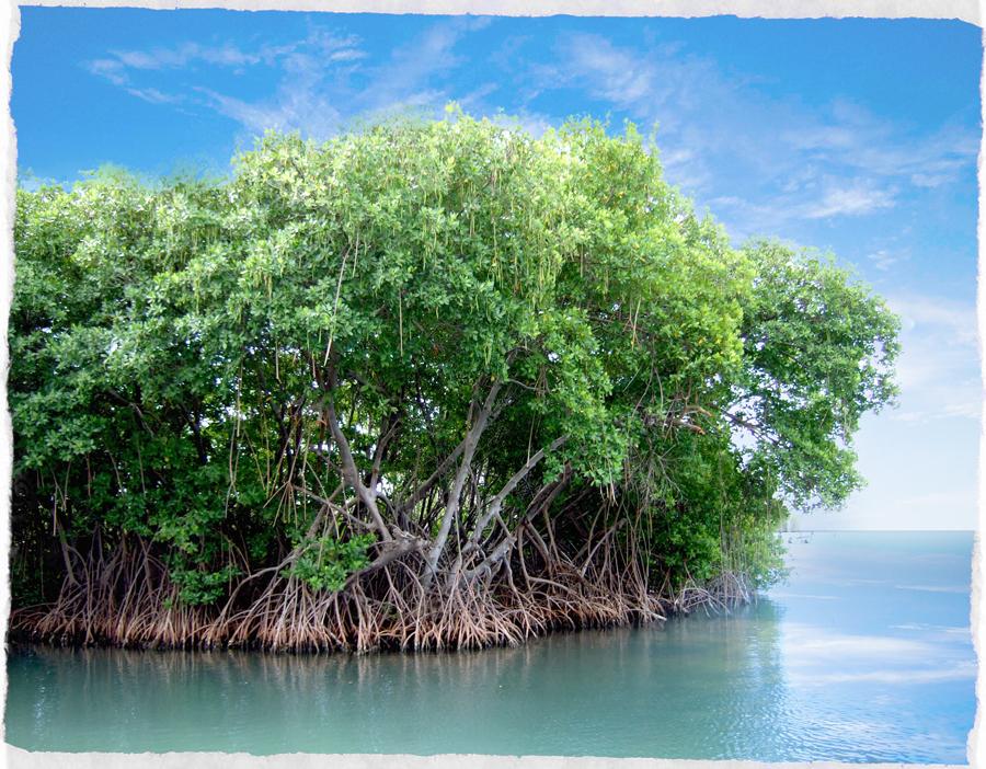mangrovie-del-delta