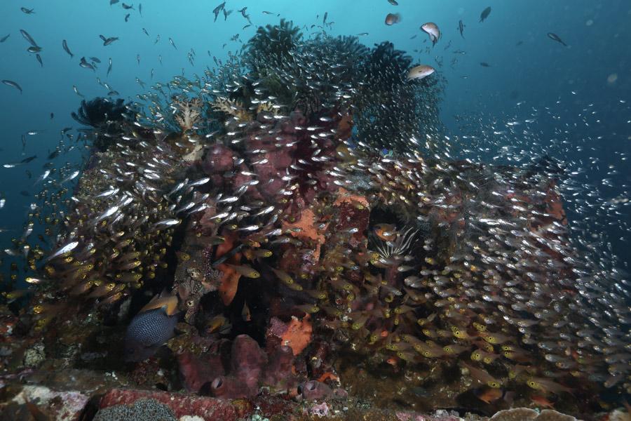 Amed, Bali - non trovi pesce in tutte le immersioni ma quando succede è una foto da portare a casa...
