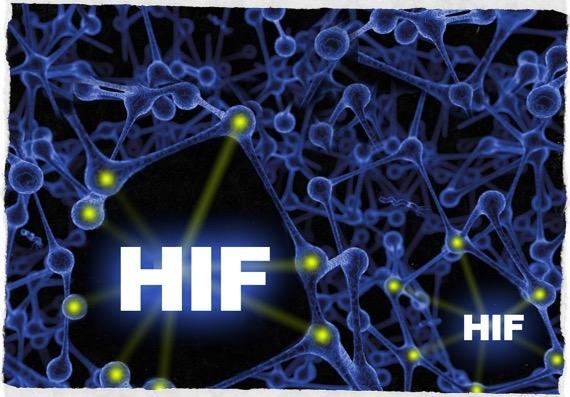 Fattore HIF small