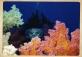 Miti del Mar Rosso: Silvia