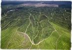 deforestazione-small