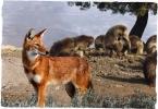 lupo-&-babuino-small