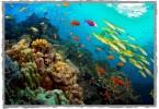 barriera-corallina-small