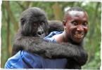 gorilla di montagna-small