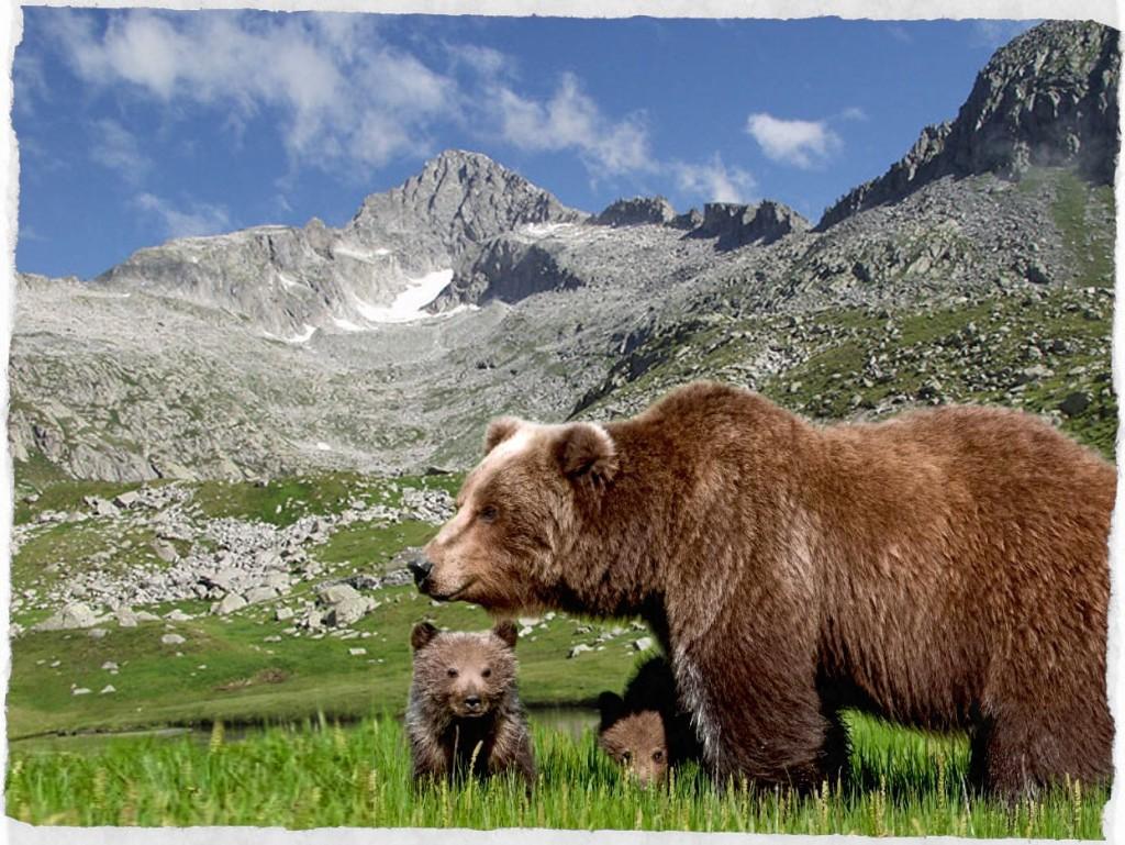 orso bruno del trentino
