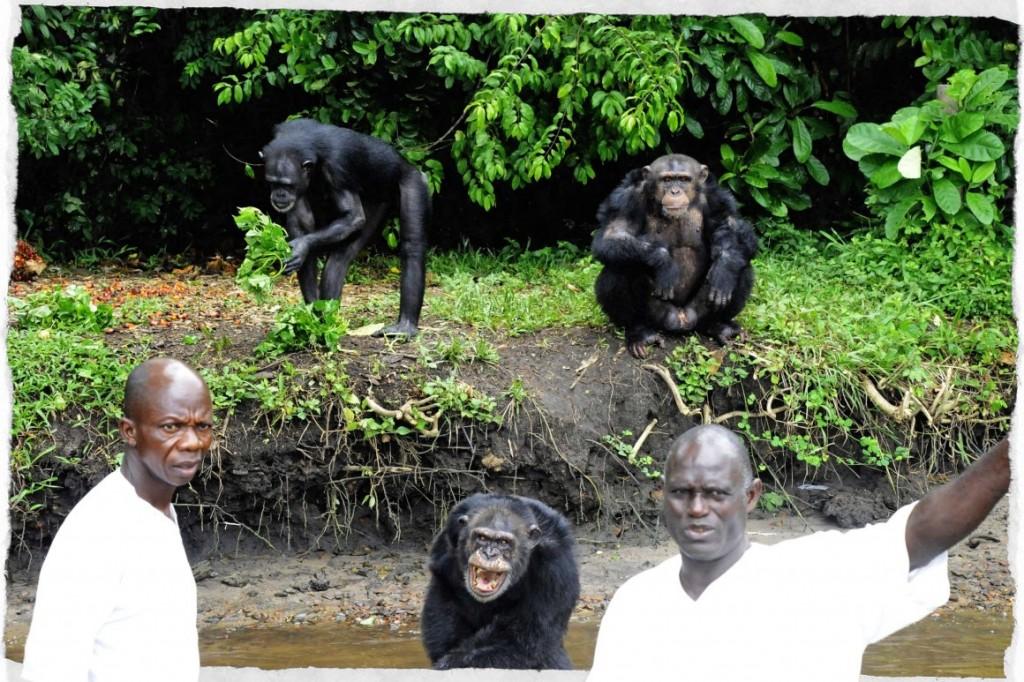 scimpanze liberia 2