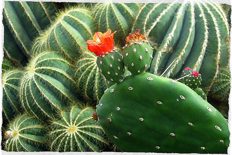 Piante che danno energia imperial bulldog for Pianta cactus