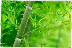 Guía-práctica-del-bambú