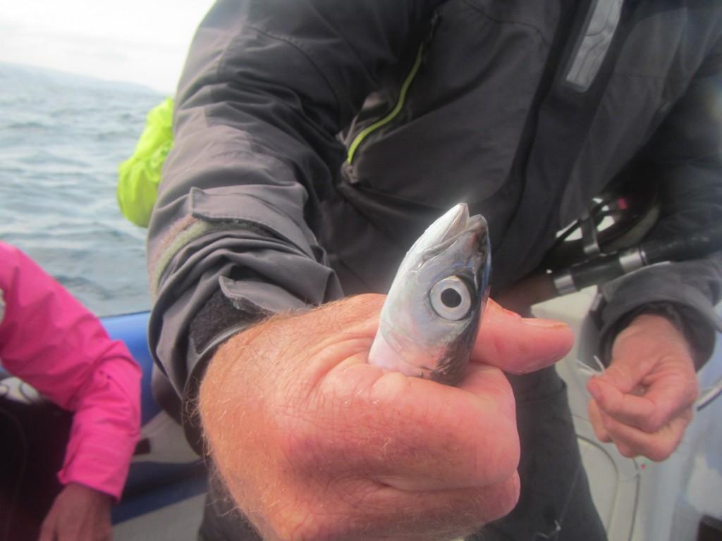 Le uniche sardine che abbiamo visto erano quelle pescate da Cammy, lo skipper, con la lenza
