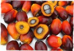 oil-palm-fruit-small