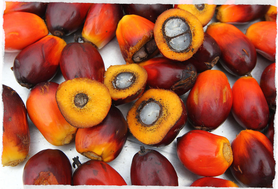 oil-palm-fruit