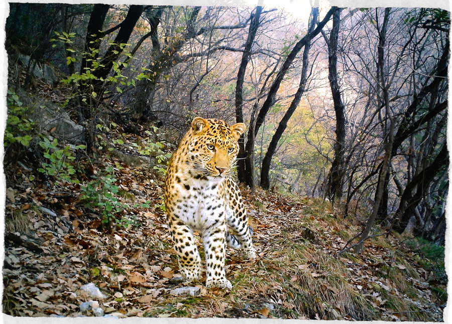 Best-Camera-Trap-Pictures-of-2012