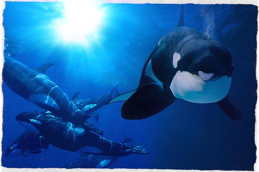 orche 2