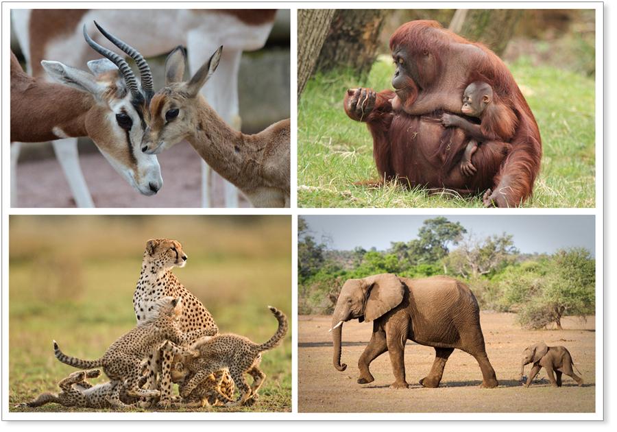 genitori-animali