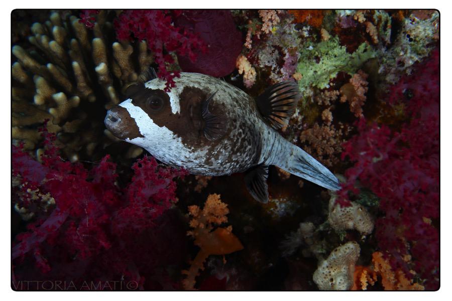 pesce tra coralli