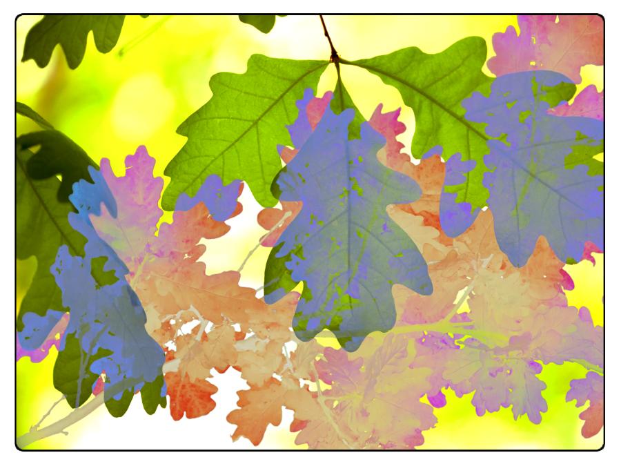 foglie-quercia