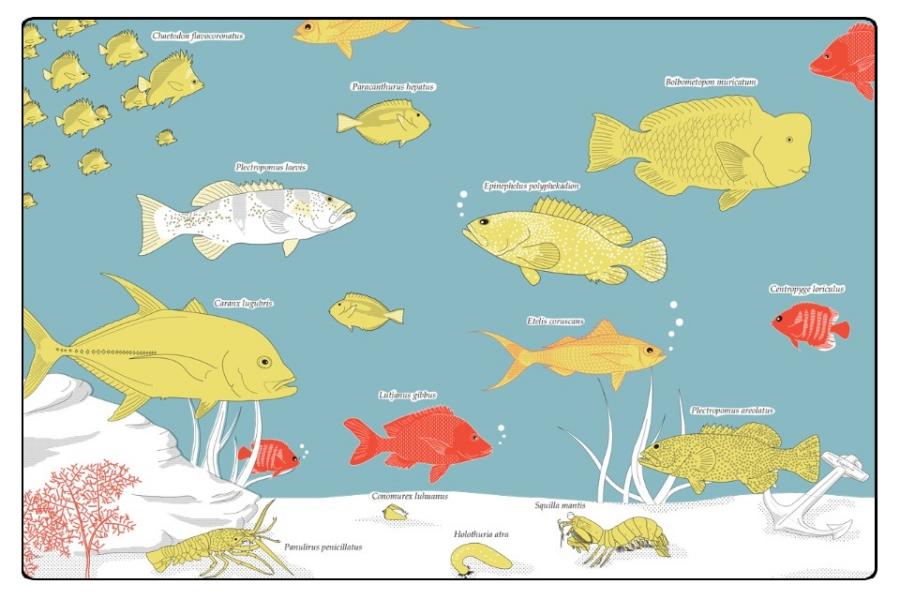 kiribatifish