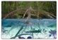 La mangrovia: ecosistema di confine