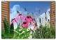 Il mio giardino di piante officinali