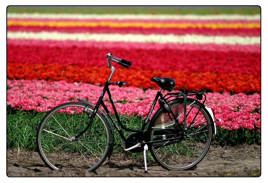 Cartina Piste Ciclabili Olanda.Olanda Itinerari In Bicicletta Tra Tulipani Arte E Natura Imperial Bulldog